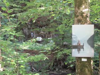 Bilder im Wald